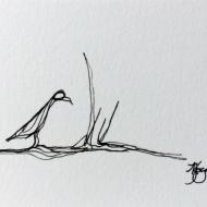 Grass Bird C Kylie Fogarty